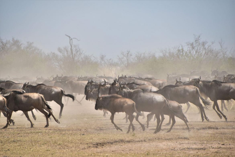 buffell2-1.jpg