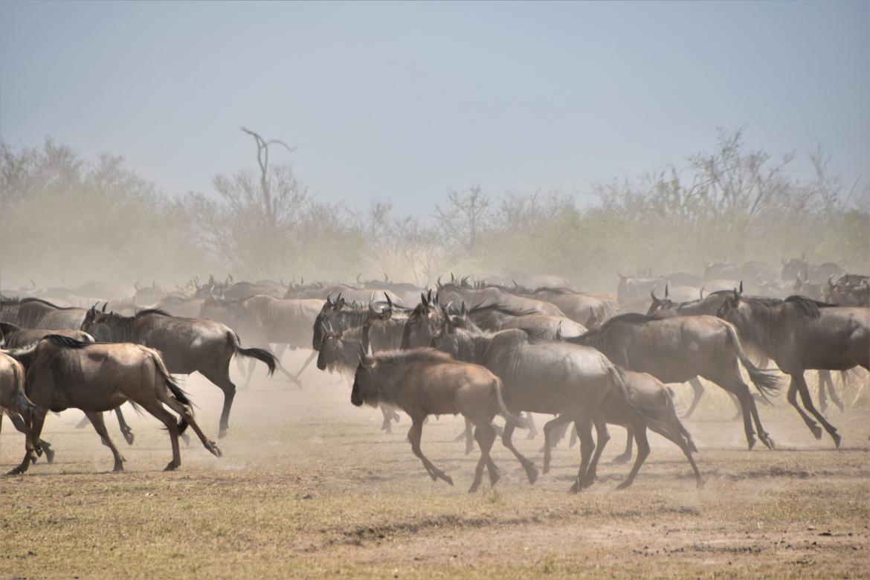 buffell2.jpg